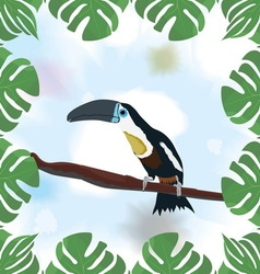 Framed Toucan sitting on a branch vector image