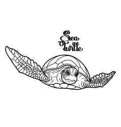 Hawksbill sea turtle vector image