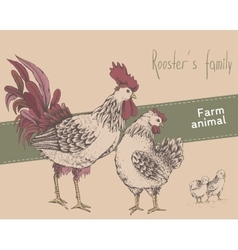 Rooster hen chicken vector image