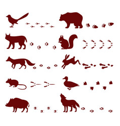 Traces of animals foot steps set contour vector