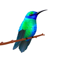 Hummingbird vector image