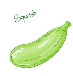 isolated cartoon fresh hand drawn squash vector image