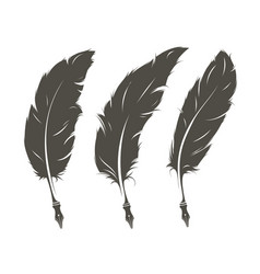 Set of three isolated feathers for writing vector