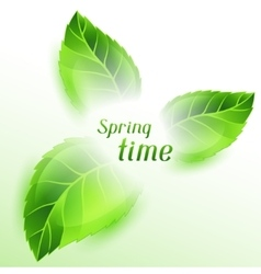 Spring time with green leaves card vector