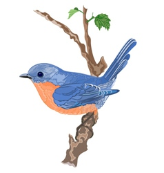 Bird orange blue on a twig shrubs vector