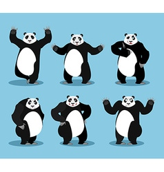Panda set Chinese bear variety of poses Animal vector image