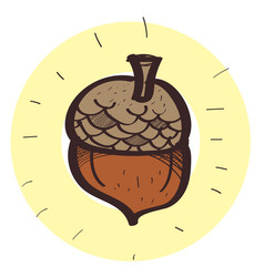 acorn colored in hand drawing style vector image