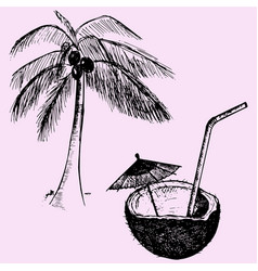 coconut tree and coconut cocktail vector image