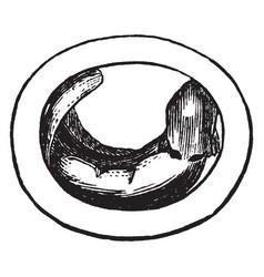 Embryo vintage vector