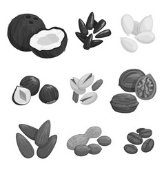 nuts grain and nut seeds icons vector image vector image