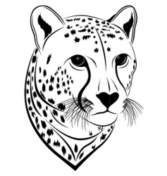 cheetah vector image