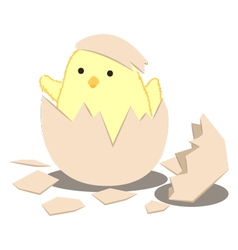 Birth Chick vector image vector image
