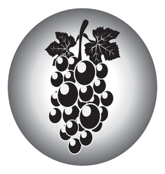 Icon of grape and leaves vector