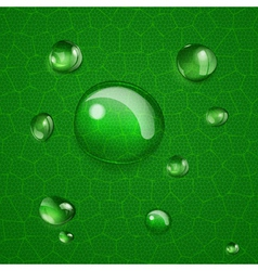 Background with drops on green leaf vector