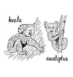 koala eucalyptus vector image vector image