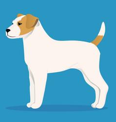 Parson russel terrier vector