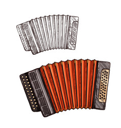 sketch accordion musical instrument vector image