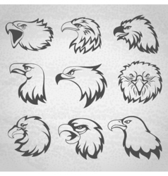 Hawk falcon or eagle head mascot set isolated on vector image