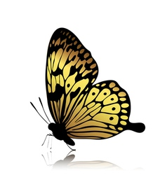 Golden butterfly vector