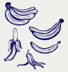 Bunch of bananas peeled banana and banana peel vector