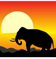 africa sunset elephant vector image