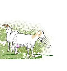Goats vector