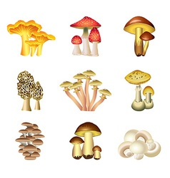Mashrooms set vector
