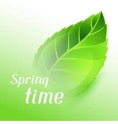 Spring time with green clear leaf vector