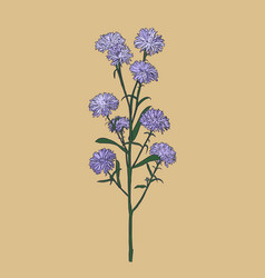 aster flower sketch vector image vector image