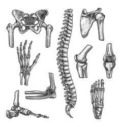 bone and joint sketches set for medicine design vector image vector image