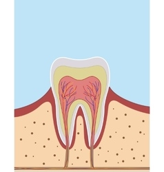Inside on a single tooth vector