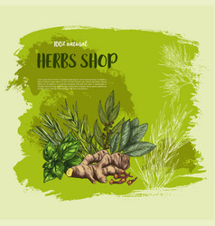 Spices and herbs poster for shop vector