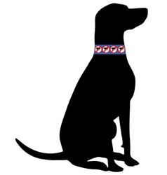 Dog with flea collar vector image
