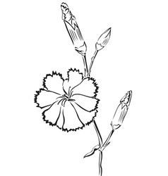 Beautiful carnation vector