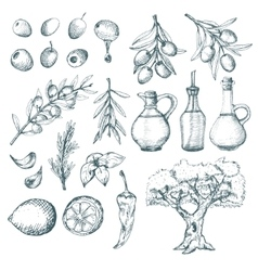 Olive products and supplements sketch vector