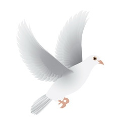 White dove isolated vector
