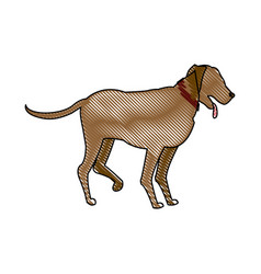 drawing cartoon dog walking pet animal vector image