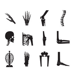 Orthopedic and spine icon set on white background vector
