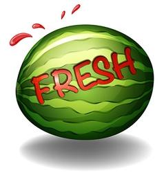 Water melon vector