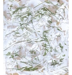 Herbarium with green summer meadow herbs and vector