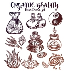 Hand drawn organic medicine herbs and healing set vector