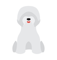 Adorable young poodle yorkshire terrier vector