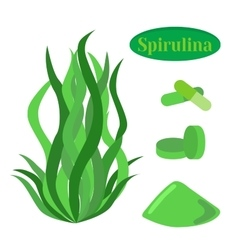 Set of spirulina sea weed algae in flat vector image