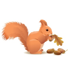 Squirrel with acorns vector image