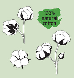 Cotton set natural material sign drawing flower vector