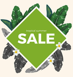 Summer sale with tropical palm leaves and white vector