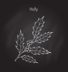 holly tree branch vector image
