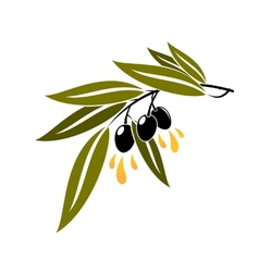 Black olives on a branch dripping olive oil vector image