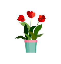 Green house plant in pot leaf flower flat vector