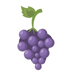 Cartoon fresh grape fruit icon vector